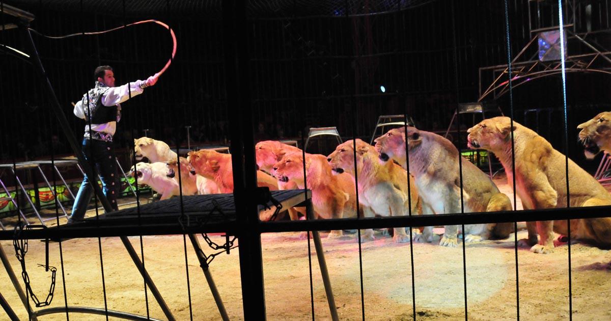 Paderborn verzichtet auf Zirkus mit Wildtieren