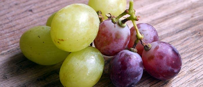 Ablenkfütterung mit Weintrauben bei Wespen
