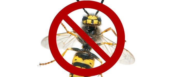 Wespen töten