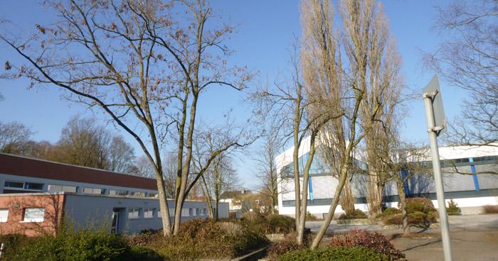 Residenzbad Paderborn Bäume gefällt